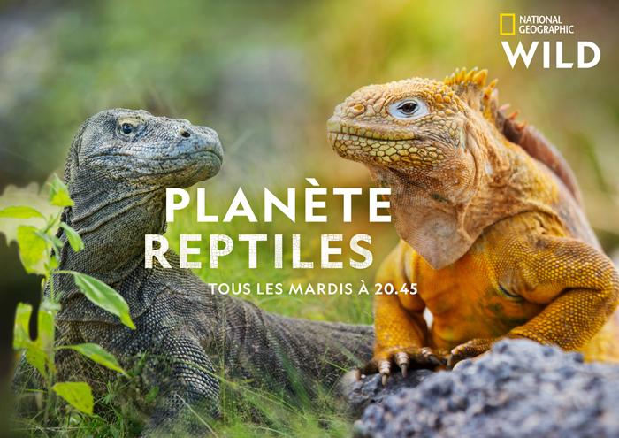 keyart_planetereptiles_04_2020_1