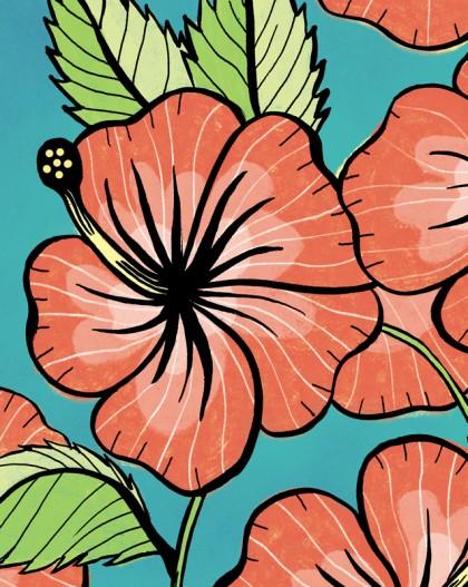 hibiscus_home