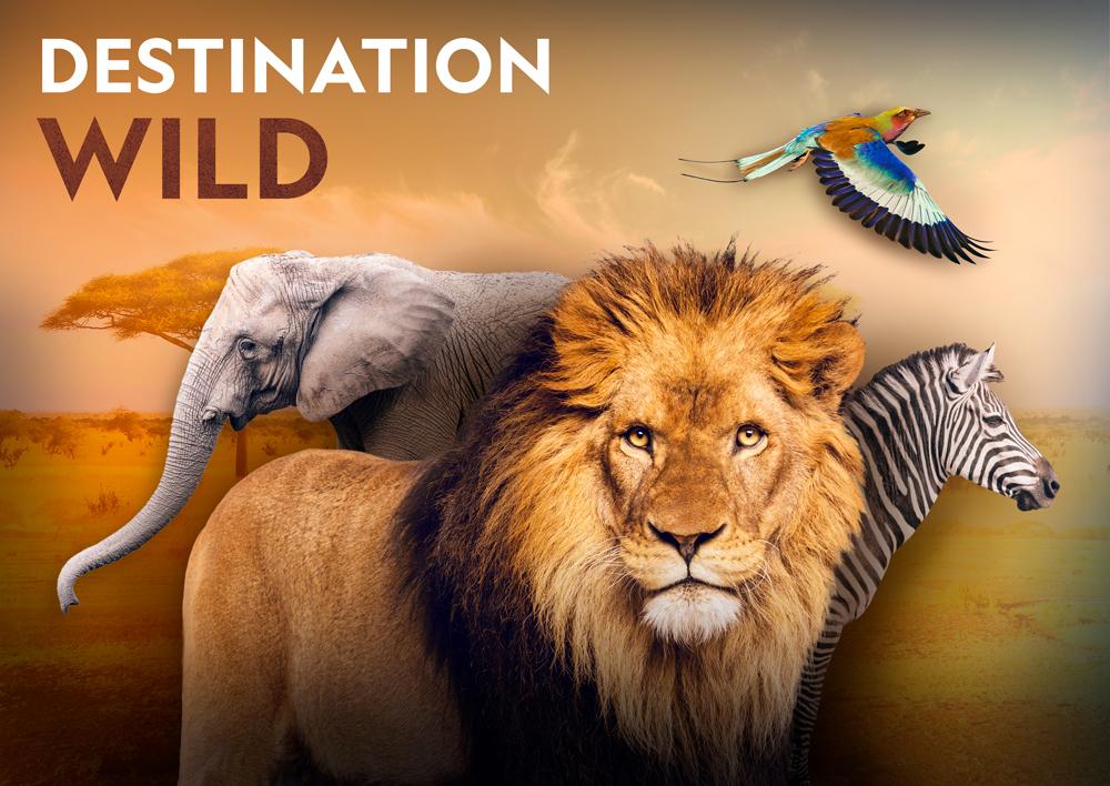 destinationwild_savane_keyart_02_2020_web