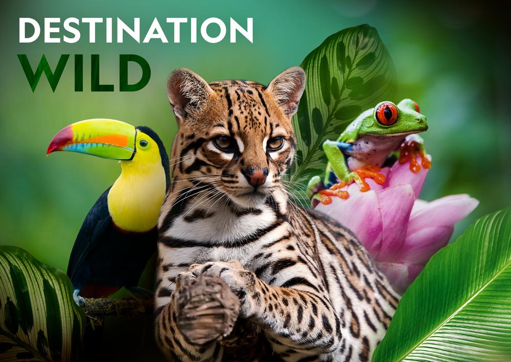 keyart_destinationwild_jungle_web